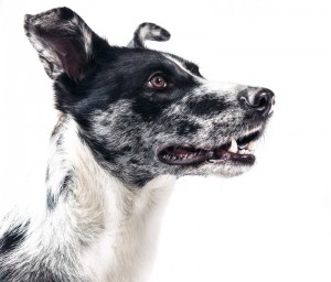 starkes-Foto-Hund-auf-weiss