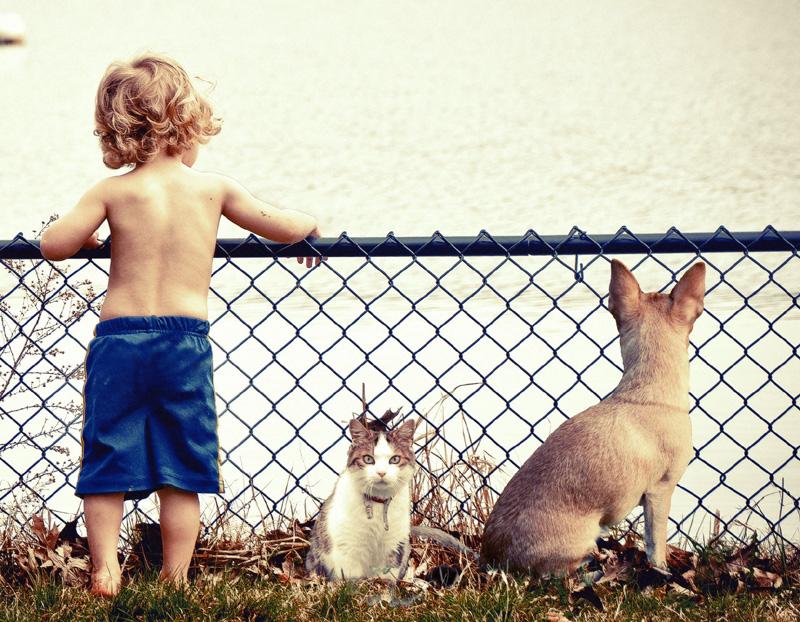 rangordnung bei hunden