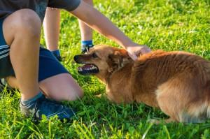 bestrafter_Hund