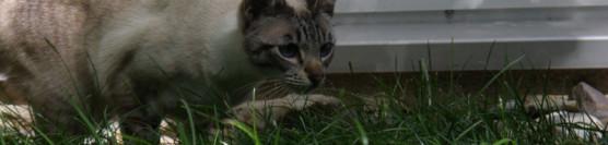 Katze gefunden??