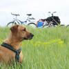 Zugarbeit für die Hundeseele