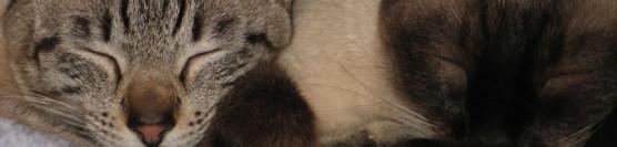Zwei Katzen = Doppeltes Glück?