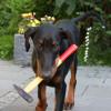 Butler Dog, der Familienhund 2.0