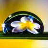 Bachblüten – Kleiner Tropfen Große Wirkung