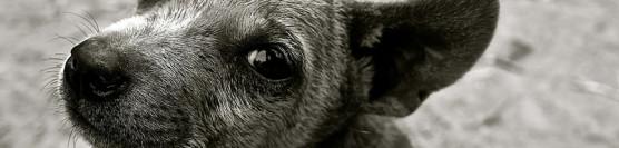 Tierschützer die keine sind…